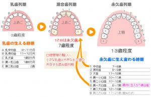 歯は何本? 大田区西蒲田の小児歯科・小児矯正